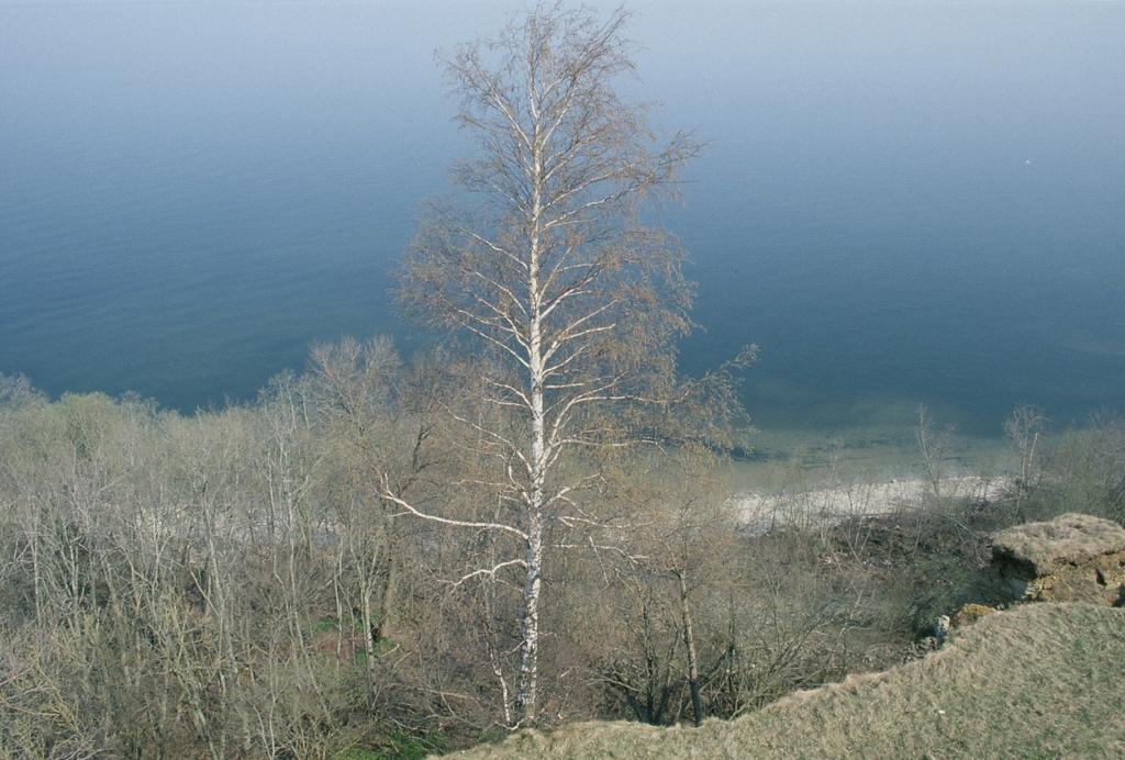 Тойла Весна Море